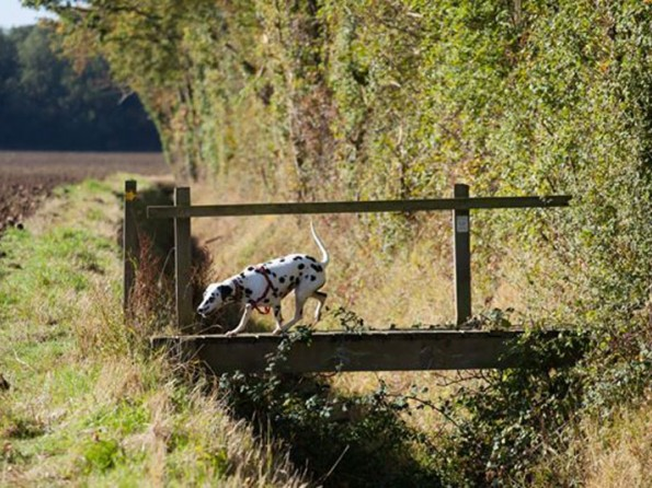 Dog Friendly Places To Stay Near Bakewell