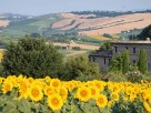 Apartments in a Country House Walking Distance to Mogliano, Le Marche, Italy