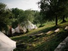 Safari Tent Glamping in an Olive Grove with Pool in Tuscany, Italy