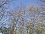 Bubble Star image #8