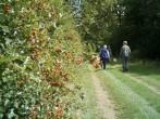 Walk on the farm