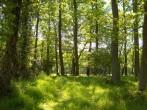 Unspoilt forest