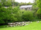 4 Bedroom Characterful Barn Conversion on a Working Farm in Launceston, Cornwall, England