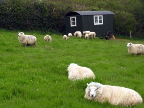1 Bedroom Quirky Shepherd's Hut on a Working Organic Farm in Launceston, Cornwall, England
