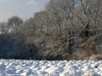 Winter surroundings