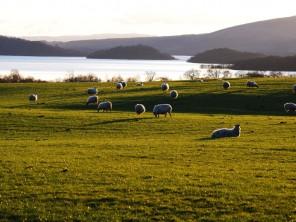 Loch Lomond, Stirling & the Trossachs
