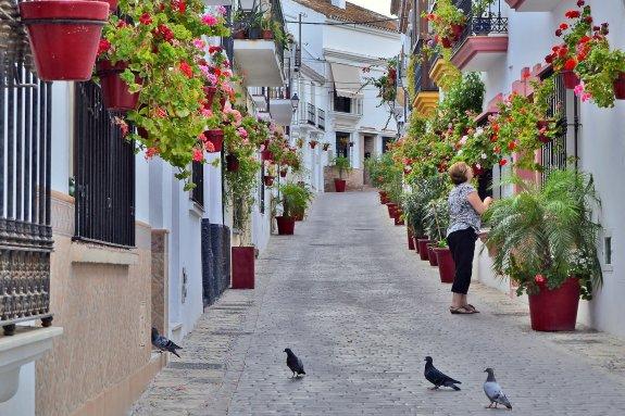 Estepona street flowers